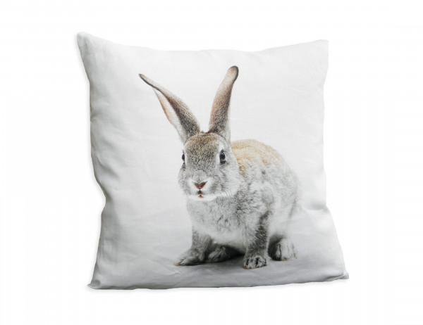 Sander Wendekissen One Rabbit